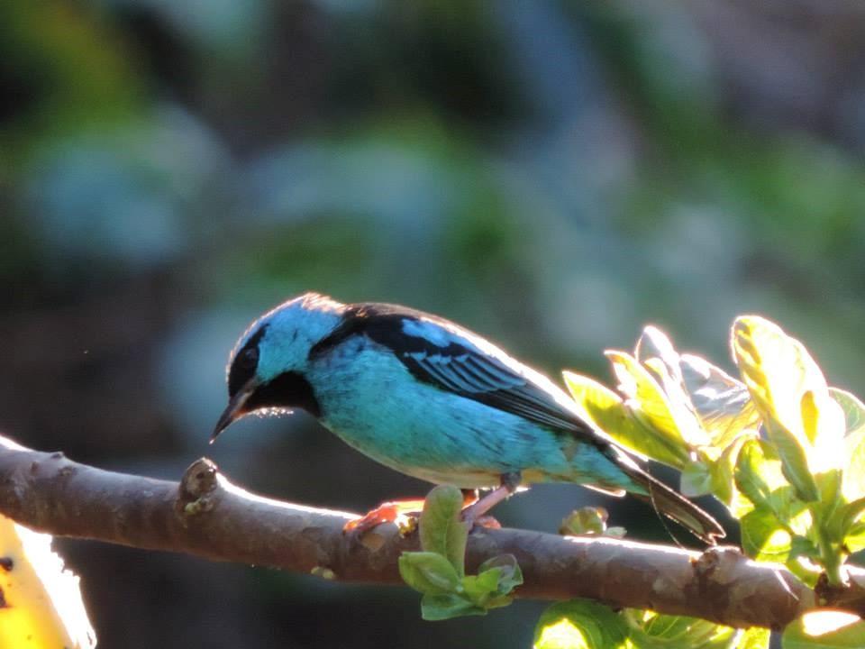 Resultado de imagem para observadores de aves